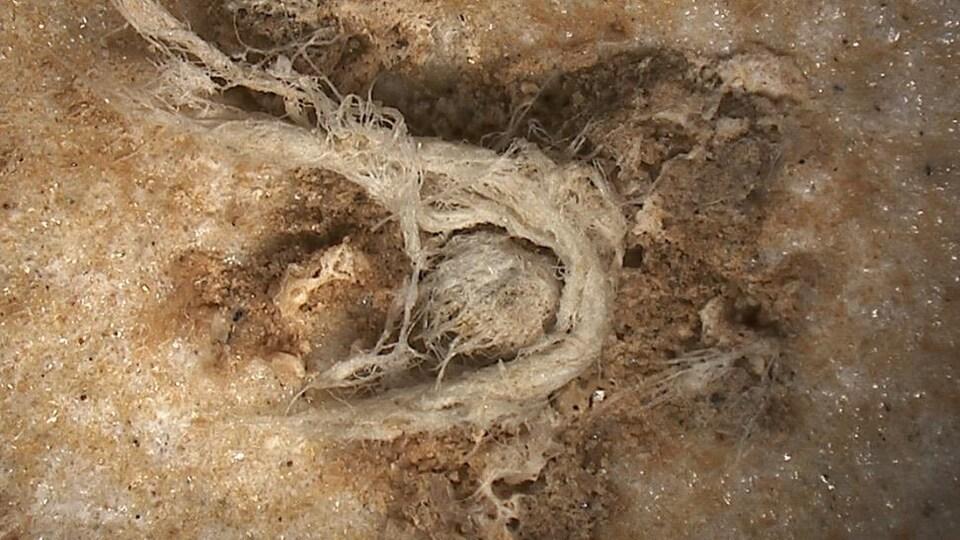 Photographie du fragment de corde prise par microscopie numérique (le résidu mesure environ 6,2 mm de long et 0,5 mm de large).