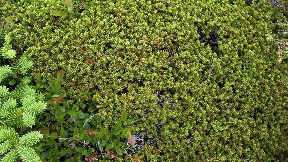 Une plante rampante verte sur le sol.