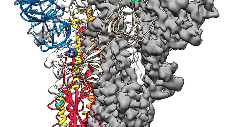 Voici la carte la structure moléculaire de la protéine de pic de 2019-nCoV.