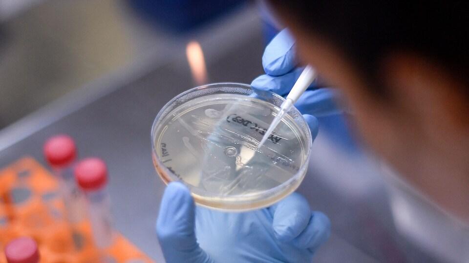 Gros plan sur un échantillon de bactérie manipulé par un chercheur dans un laboratoire.