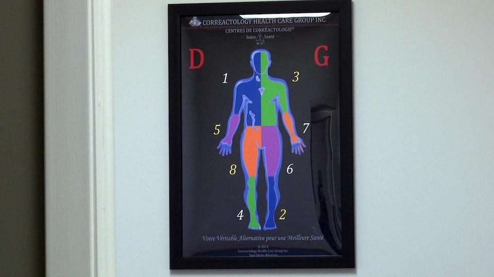 Une photo d'un corps divisé en 8 segments.