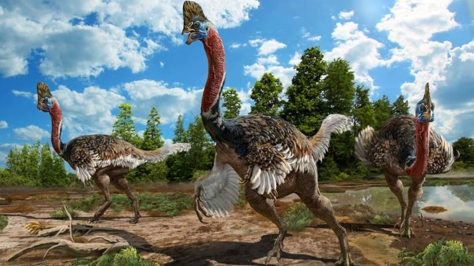Représentation artistique du Corythoraptor jacobsi.