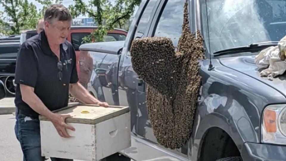 L'apiculteur Van Sorensen enlève soigneusement les abeilles sur la camionnette.