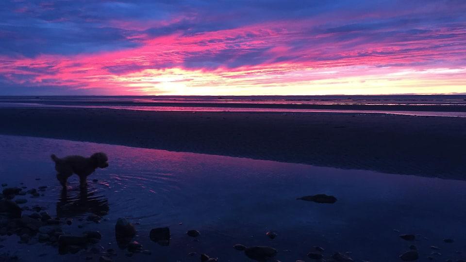 Un chien sur la plage au coucher de soleil