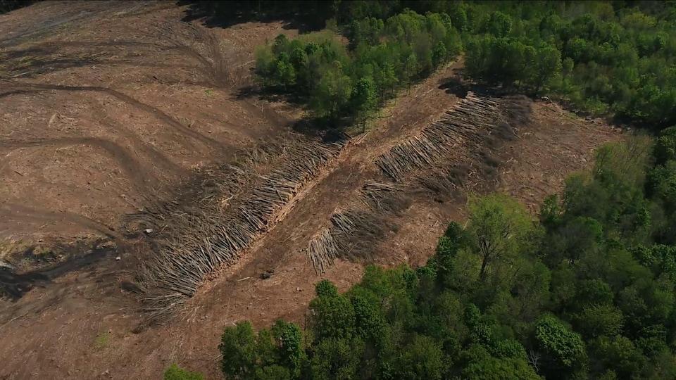 Vue de drone d'une des parties de forêt coupée à blanc. On voit les arbres couchés au sol.