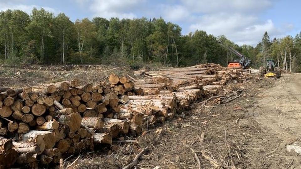 Des billots de bois entassés sur un terrain déboisé.