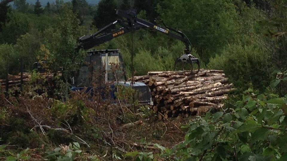 Coupe forestière dans une forêt.
