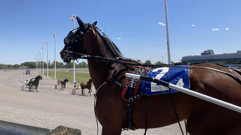 Un cheval débute la course vers l'âge de deux ans et peut poursuivre le sport jusqu'à 14 ans.