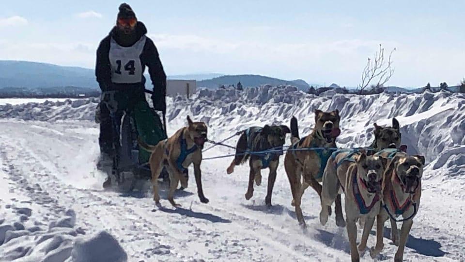 Un meneur de chiens et son attelage en pleine course sur une piste enneigée.