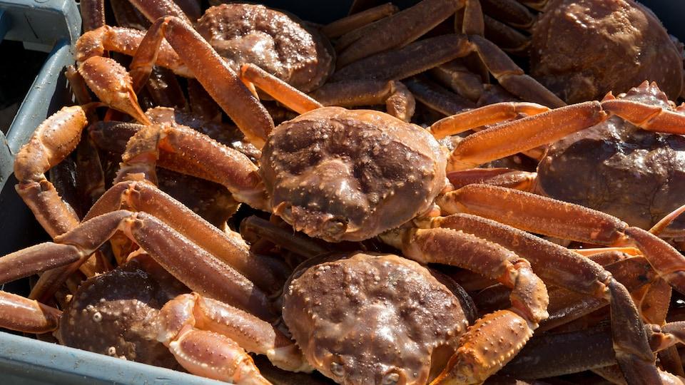 Crabe des neiges.
