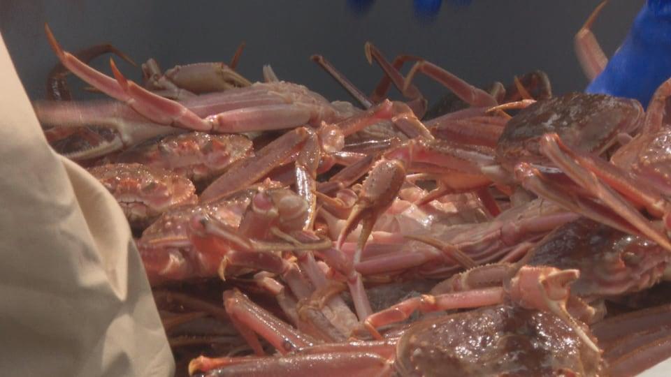 L'industrie du crabe des neiges rapporte plusieurs millions de dollars par année dans la Péninsule acadienne