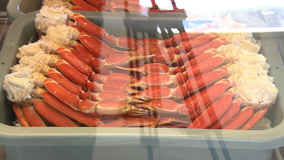 Du crabe des neiges dans un bac