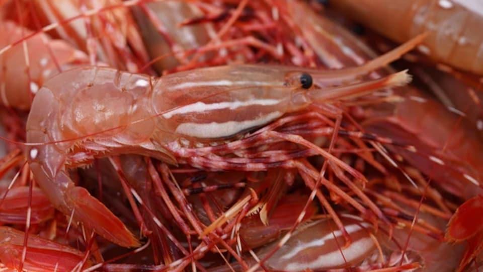 Des crevettes tachetées