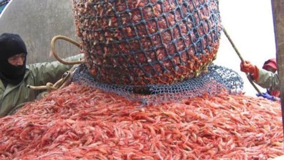 Les crevettes congelées canadiennes ne sont plus soumises à des tarifs douaniers européens de 12 %.