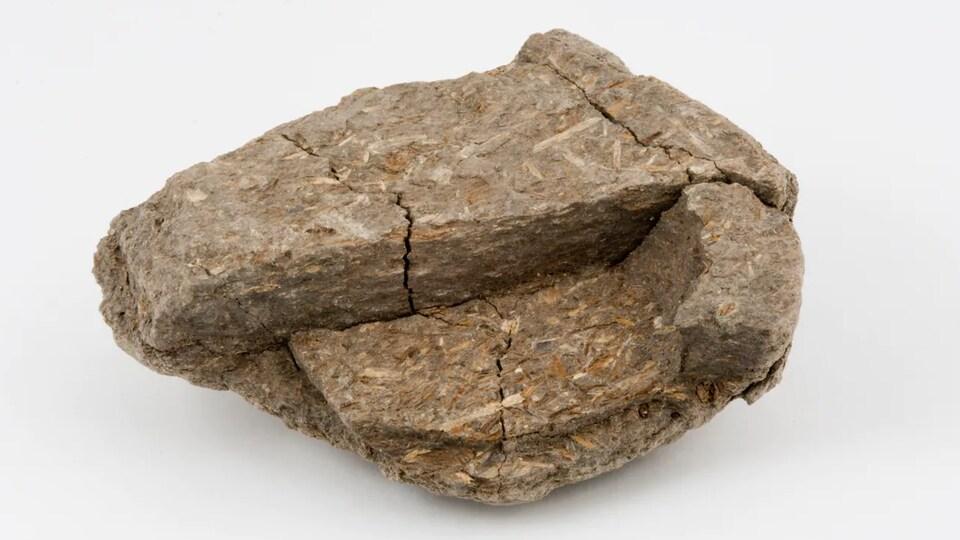 Un gros crottin fossilisé.