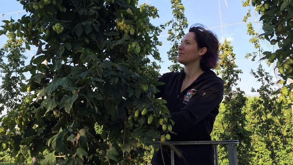 Cynthia Guindon, copropriétaire de la houblonnière de Verner.