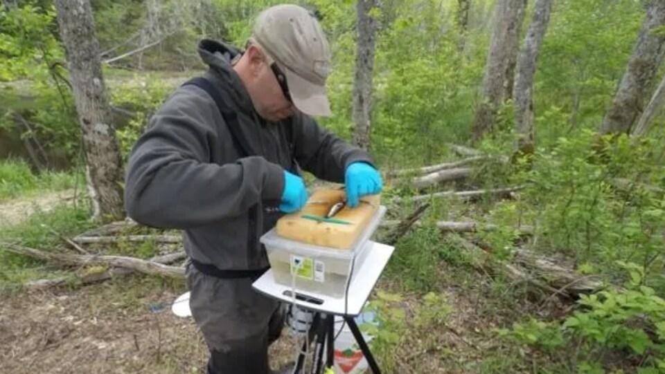 Le biologiste David Hardie manipule un saumon sur une table installée sur une berge de la rivière Stewiacke.
