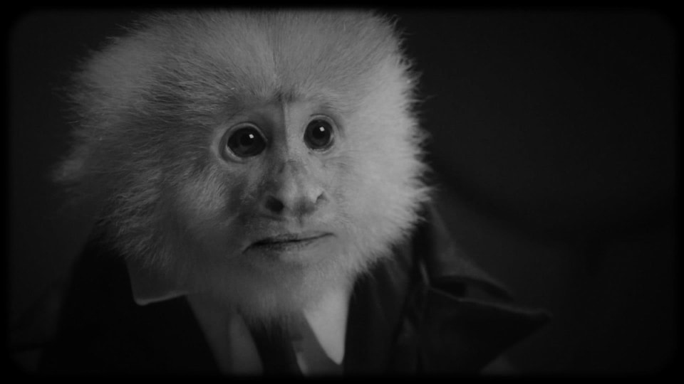 Le singe est vêtu d'une veste, d'une chemise blanche et d'une cravate.
