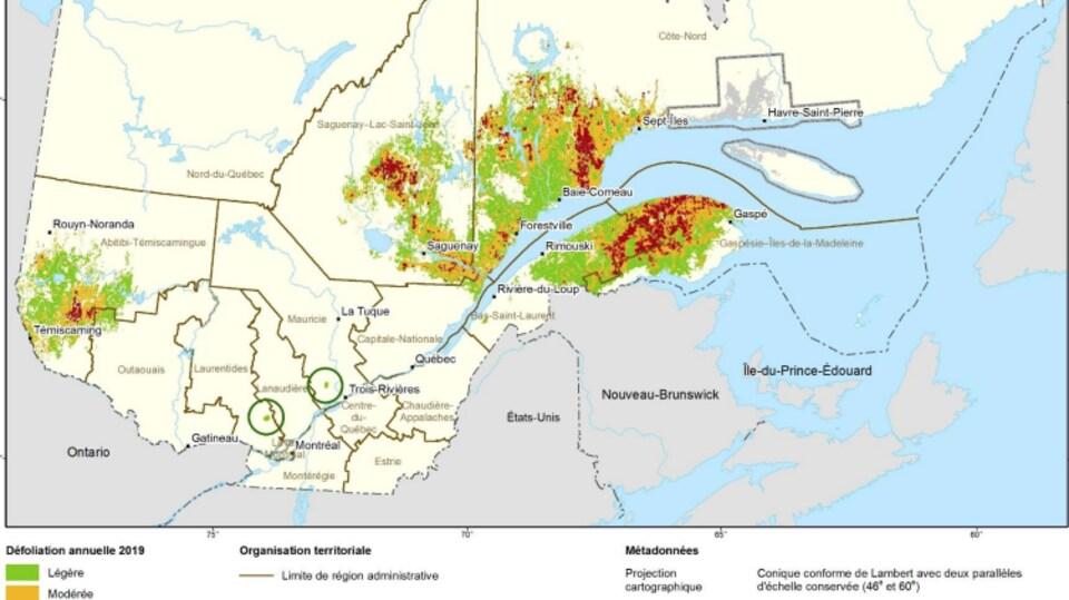 Une carte du Québec illustre que les régions de l'Est-du-Québec et l'Abitibie sont les régions les plus touchés par la défoliation.