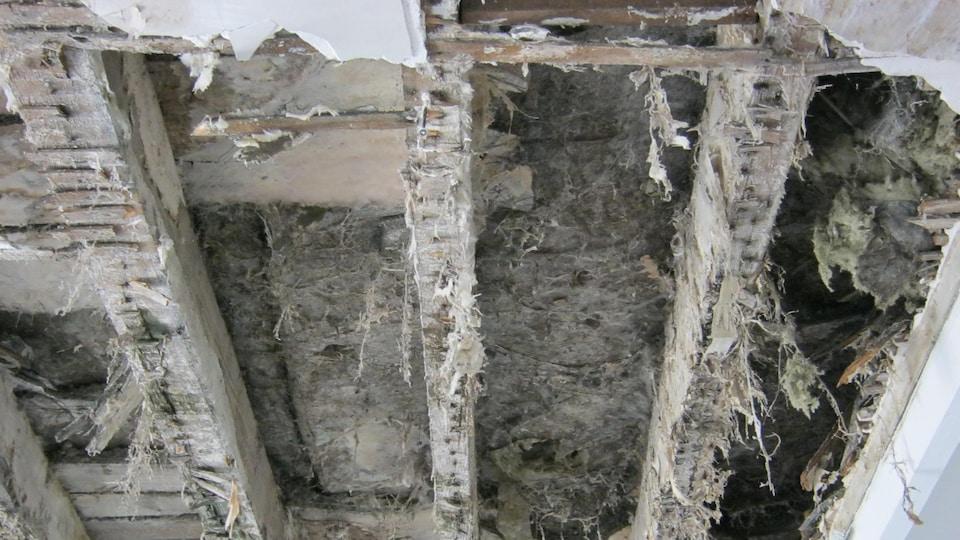 La mérule pleureuse est un champignon qui s'attaque au bois et détruit la structure des maisons.
