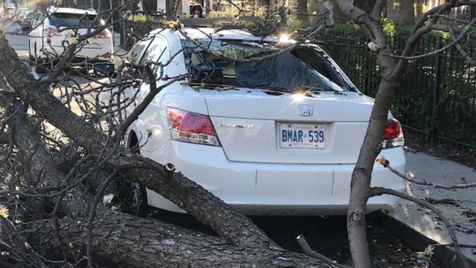 des branches d'arbres ainsi qu'un véhicule