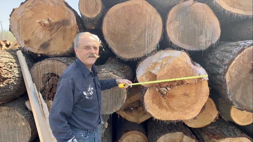 Denis Houle mesure le diamètre d'un tronc d'arbre.