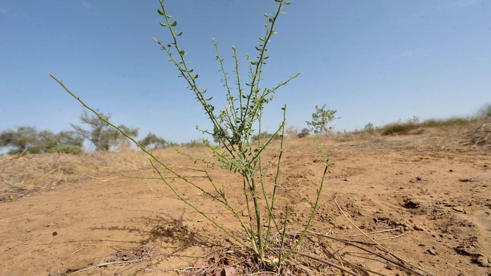 Un petit arbuste sur une terre déserte.
