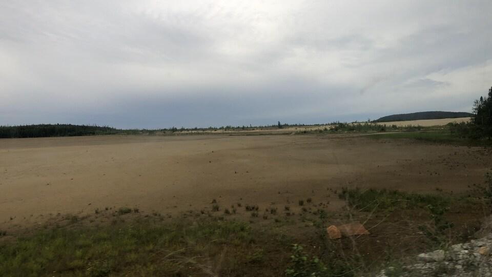 Des petites pousses vertes à travers un champ de sable orange.