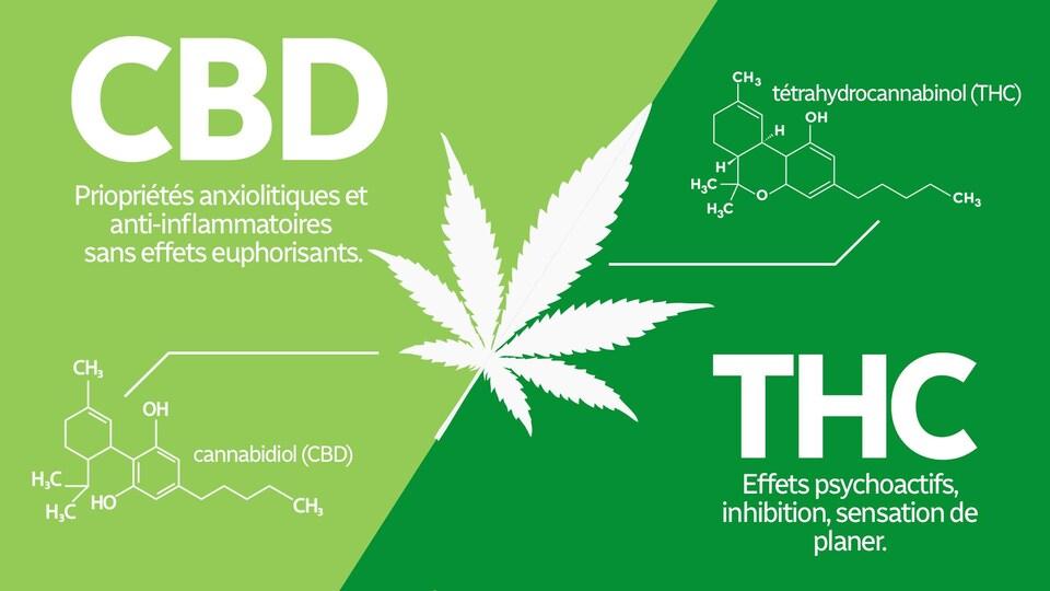 Un tableau explique que le cannabidiol (CBD) et le tétrahydrocannabinol (THC) sont les deux principales composantes du cannabis. Le CBD donne des propriétés anxiolytiques et anti-inflammatoires mais pas d'effet euphorisant  tandis que le THC donne des effets psychoactifs comme de l'inhibition et une sensation de planer.