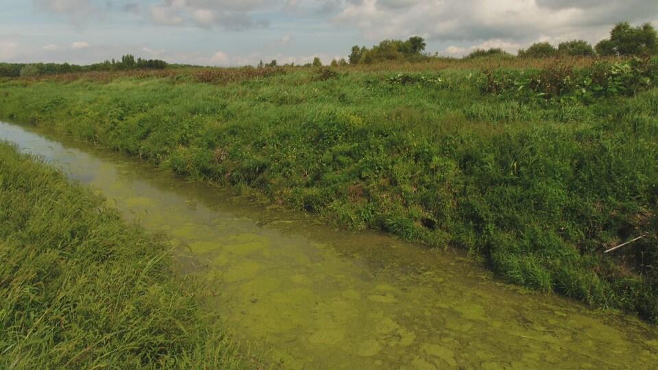 Canal d'irrigation.