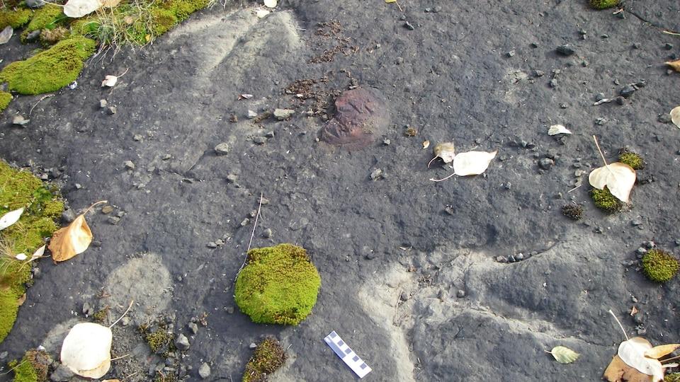 Des empreintes de pattes avec trois doigts sont incrustées dans la pierre