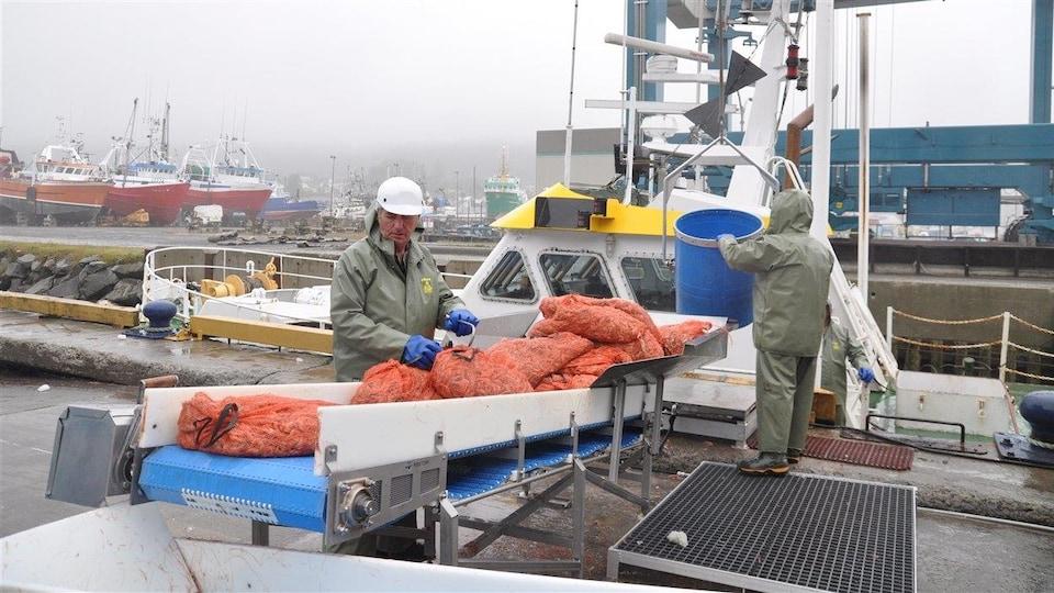 Des crevettes fraîchement pêchées débarquées à Rivière-au-Renard.