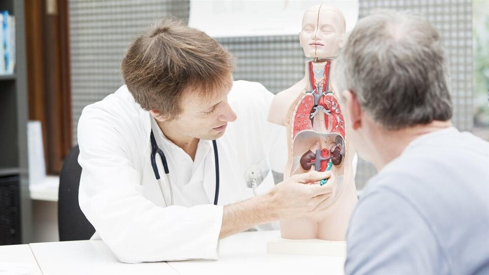 Un médecin montre à un patient une maquette du corps humain.