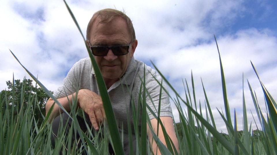 Un homme dans un champ de Kernza au Manitoba.