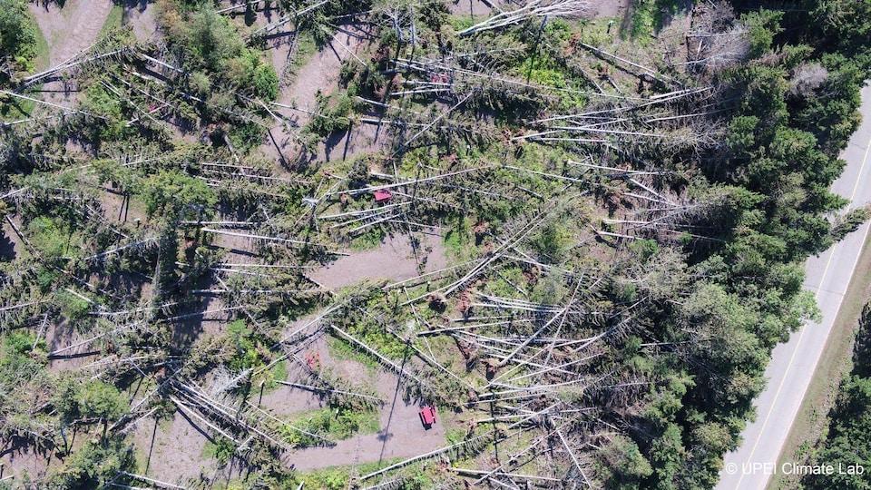Une image aérienne où on voit des arbres de tombés.