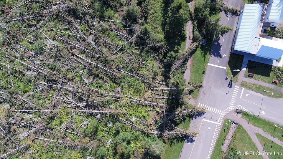 Sur cette image aérienne, on peut constater les dommages qu'a causé la tempête Dorian sur cette forêt de l'Île-du-Prince-Édouard.