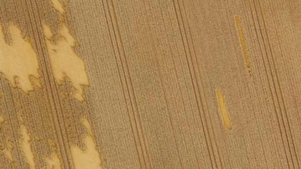 Cette prise aérienne démontre les dommages causés à un champ de blé.