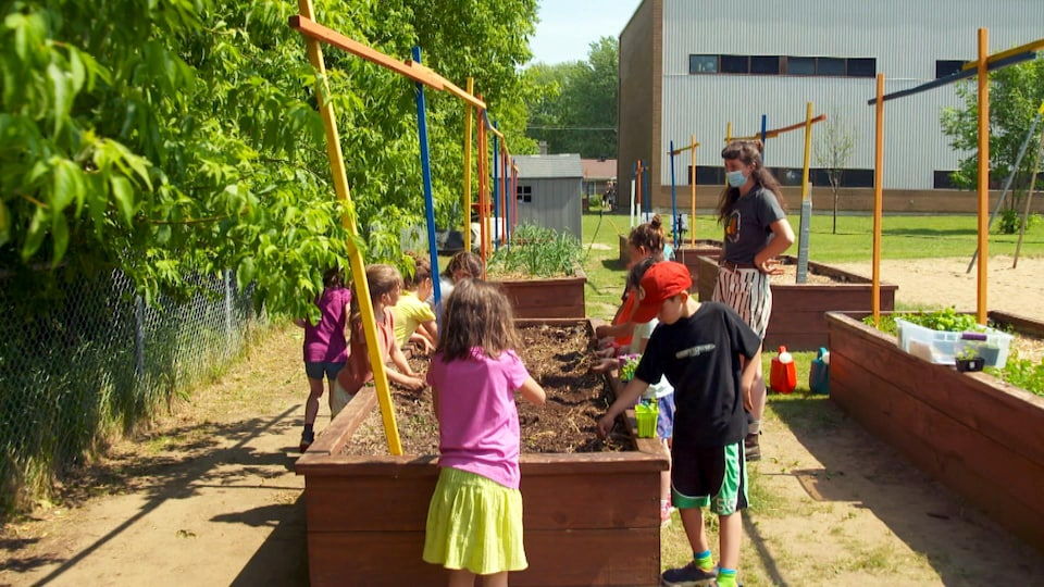 Les élèves de l'École Louis-de-France font pousser des légumes dans la cour d'école.