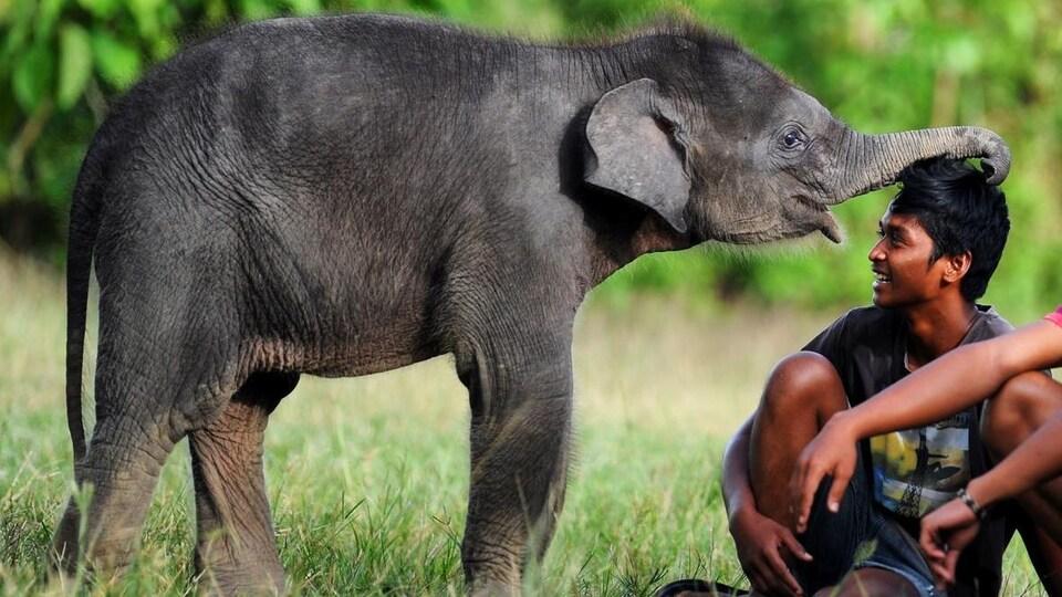 Un petit éléphant frotte sa trompe sur la tête d'un homme assis dans le gazon.