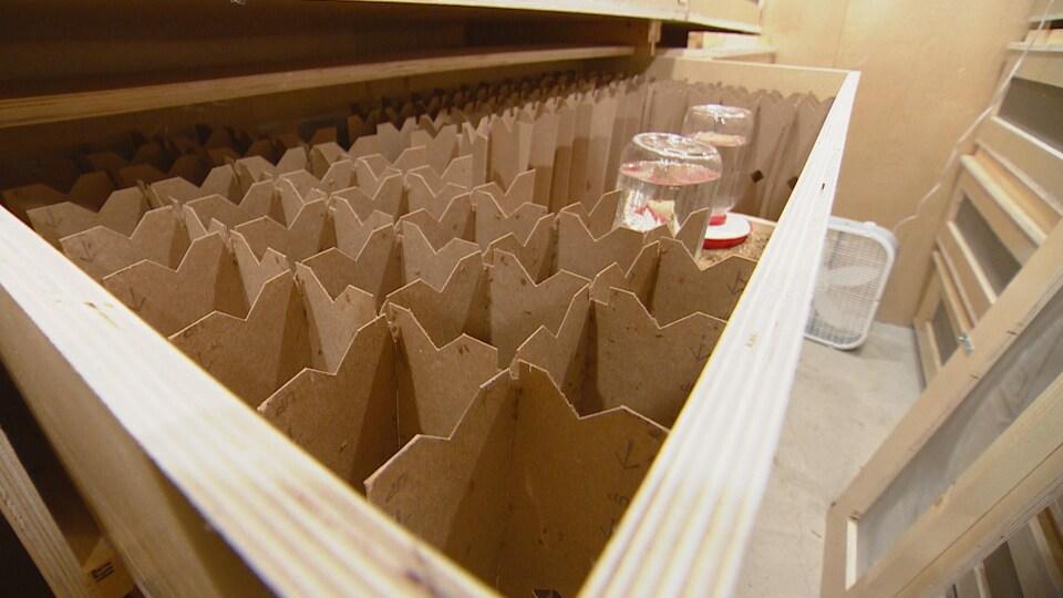 Des grillons sur des cartons.