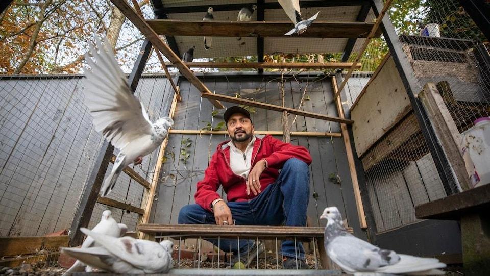 Des pigeons, certains par terre, d'autres qui volent. Un homme se trouve au milieu d'eux.