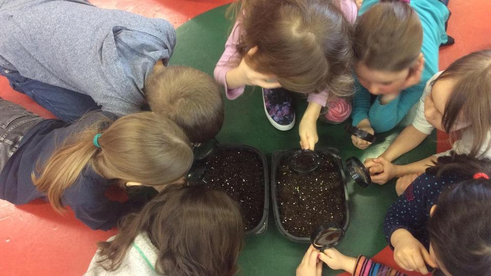 Les élèves regardent leurs semis avec une loupe.
