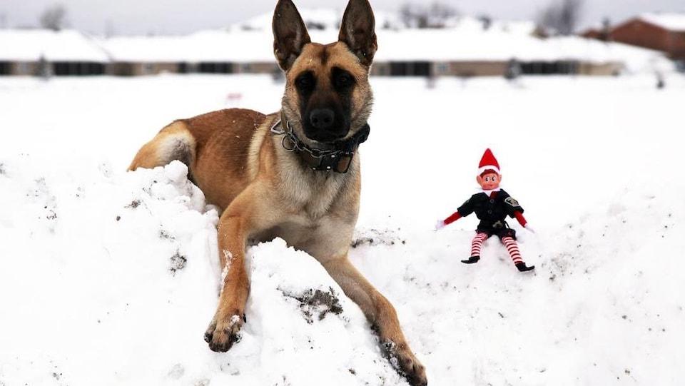 Un lutin assis à côté d'un chien berger dans la neige.