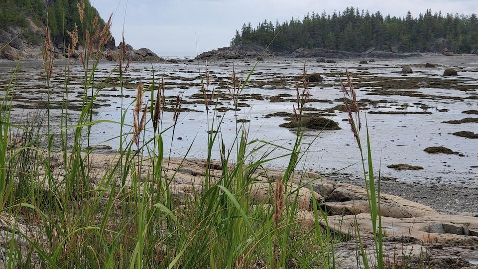 Des plantes vertes qui poussent dans le sable.
