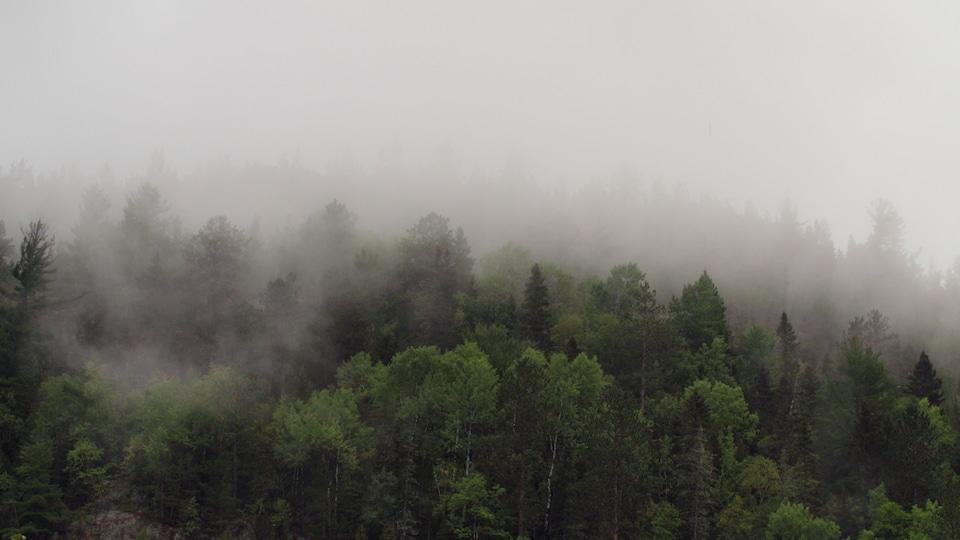 Une forêt au Québec.