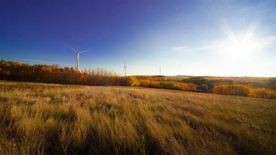Un parc éolien sur un paysage de prairies.