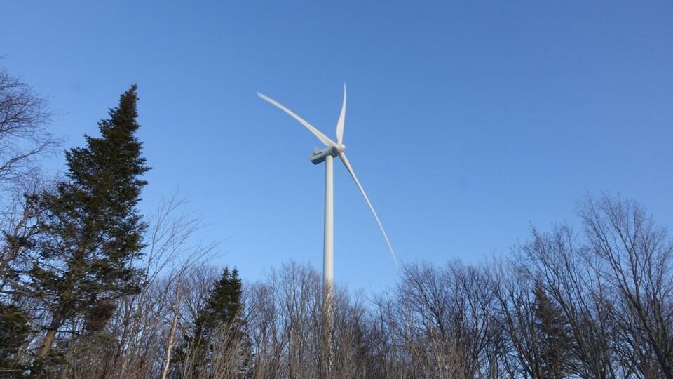 Une éolienne, derrière une rangée d'arbre.
