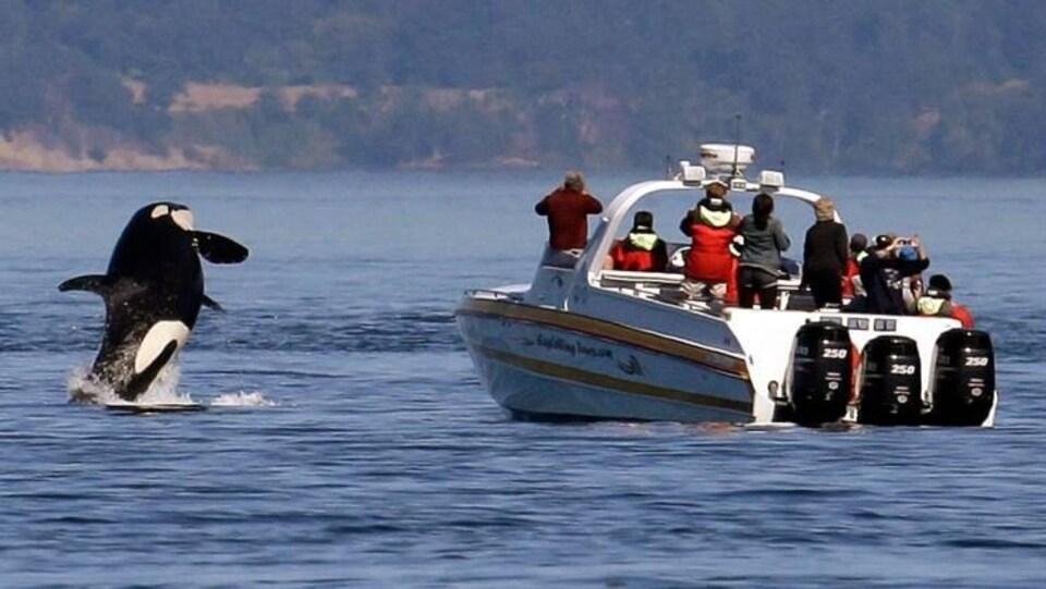 Une baleine sort de l'eau devant un bateau d'observation à moteur rempli de touristes debout.