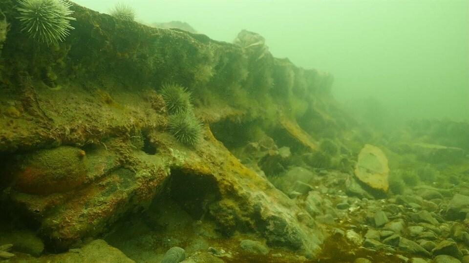 En 2014, Samuel Côté a identifié une épave située au large de Sainte-Flavie : il s'agit du Viking, qui a sombré en 1874 et dont l'épave a été découverte en 1967 par Raymond Beaulieu et Marcel Béchard.