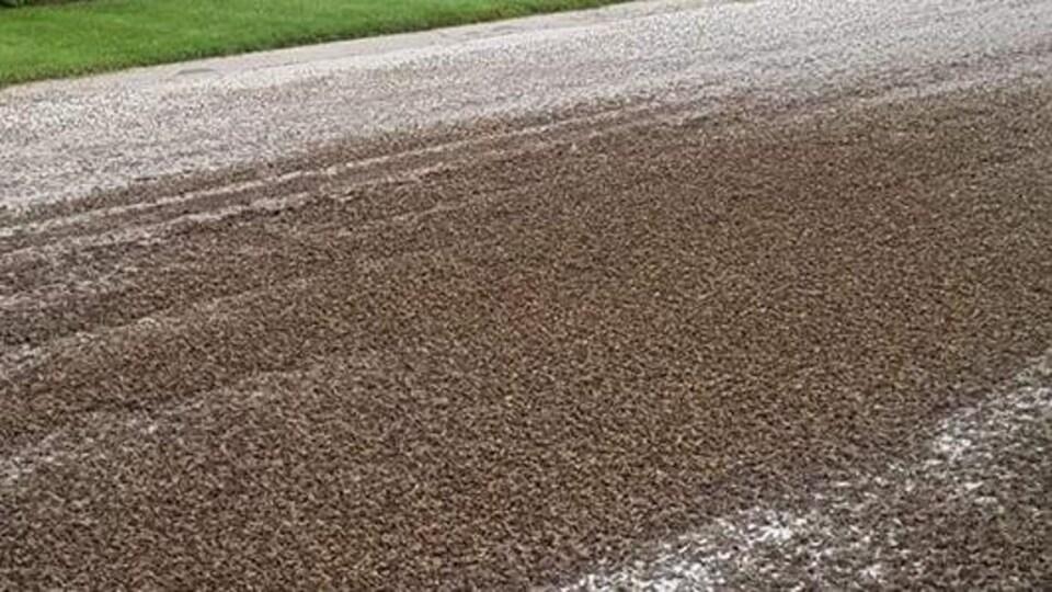 Des insectes jonchent une rue. Il y en a des milliers.